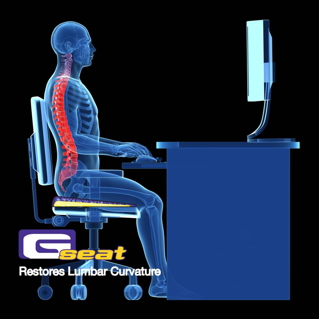 Gelco Products GSeat Restores Lumbar Curvature